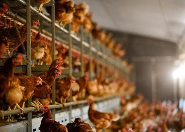 香港暫停進口南非夸祖魯納塔爾省禽肉及禽類產品