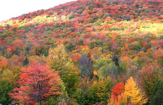 万山红遍,层林尽染,由红叶,雪山,温泉,森林共同构成了一个神奇的红色图片