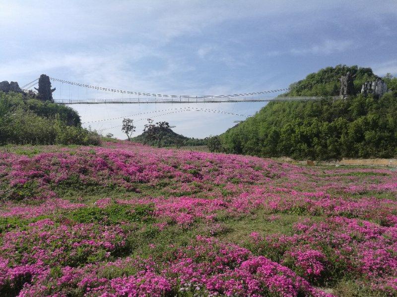 """彝山花谷景区,美丽乡村建设等初见成效,百里杜鹃风景区已初步形成""""春"""