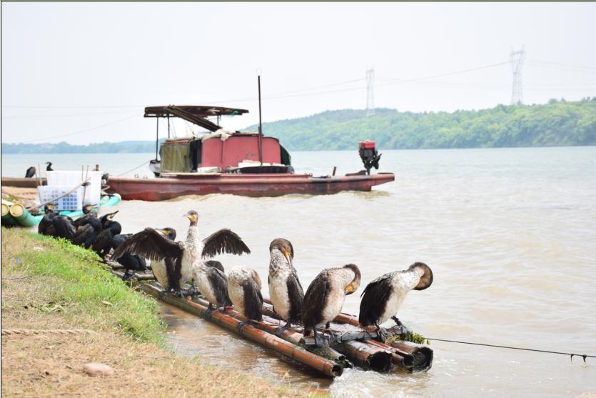 【行旅吉安】泰和:深挖生态资源做大旅游产业