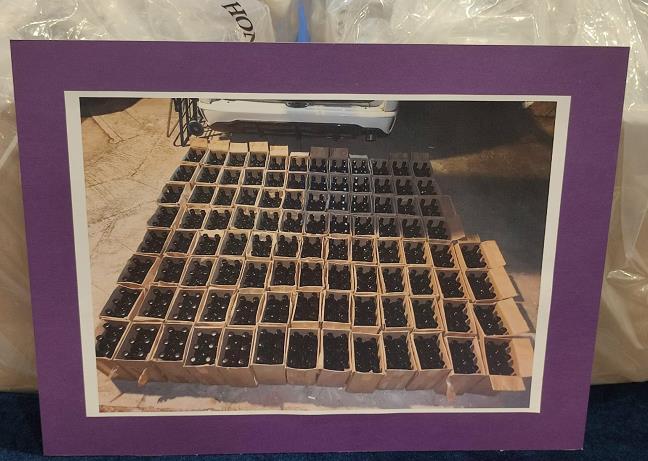 警方反毒品行動拘6男女 檢獲市值約6300萬元毒品