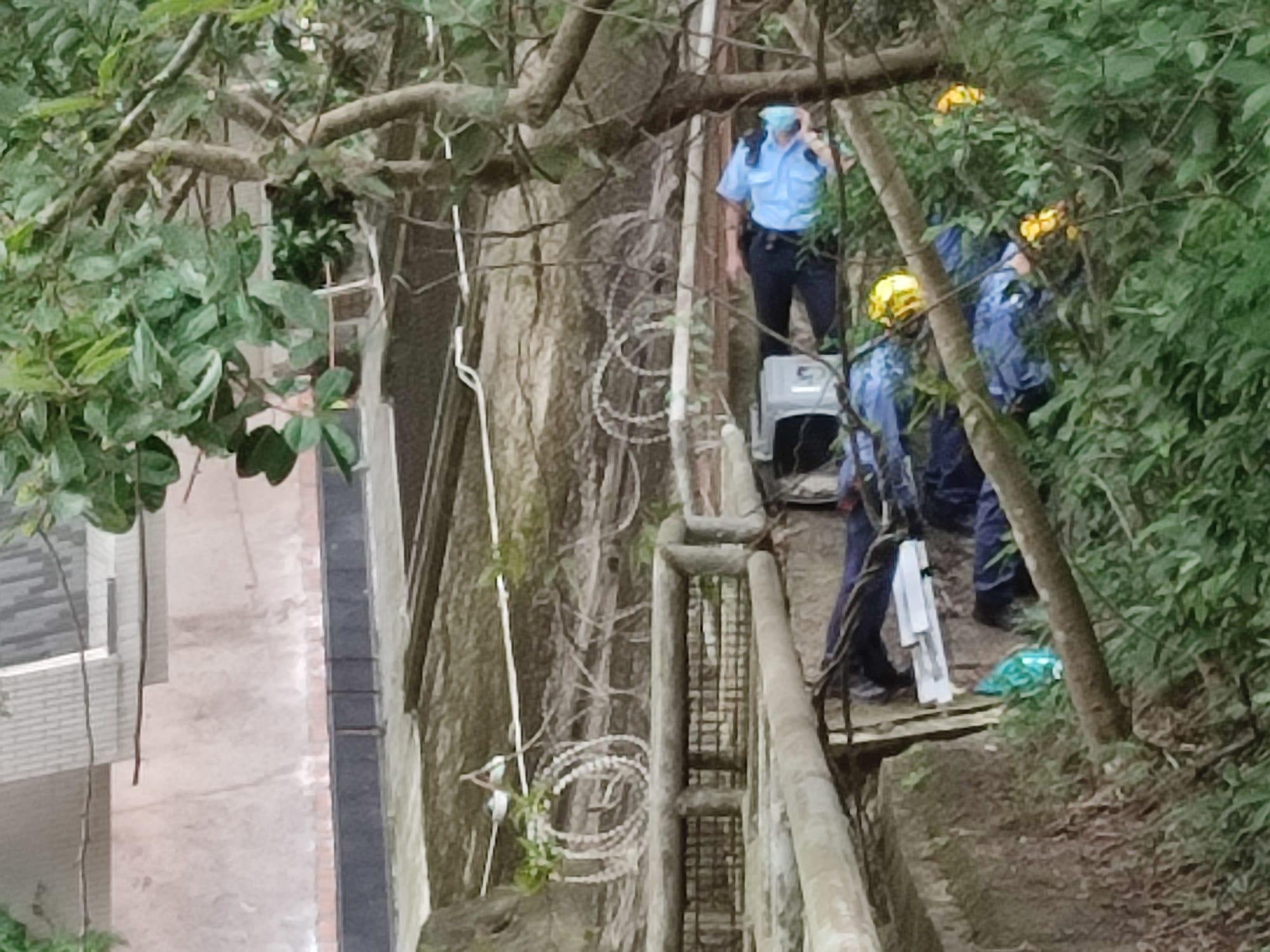 圖集 | 4隻小豬疑打鬥失足掉井 消防員逐一救出